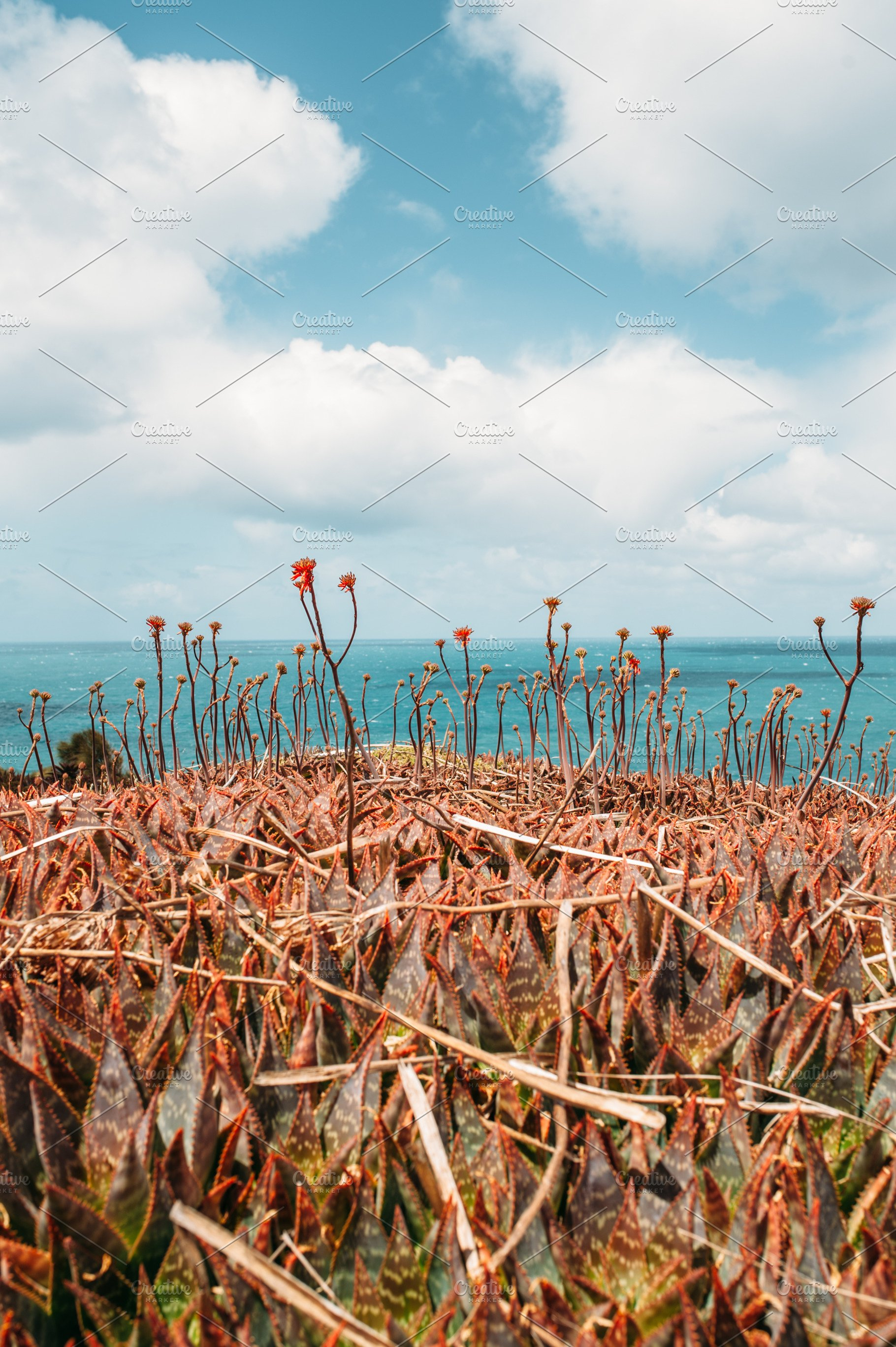 Aloe Vera flowers against blue sky